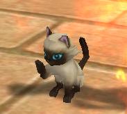 被封印的 灵宠 小猫高级小猫