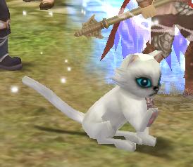 被封印的 灵宠 小猫传说小猫